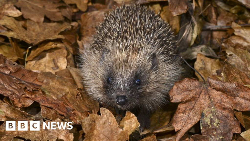 Experts call for new era for wildlife in UK thumbnail