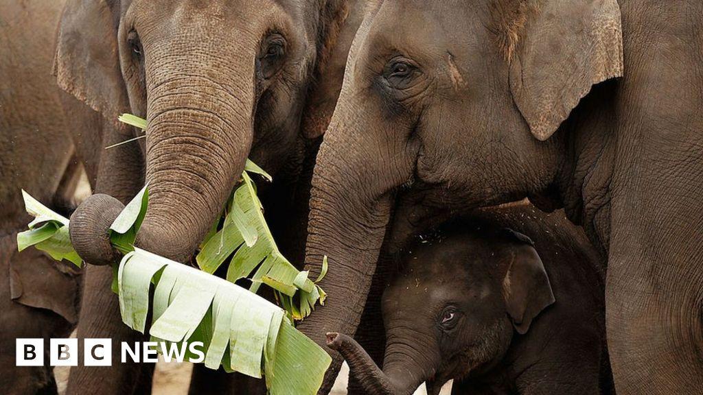 Sydney Zoo: Does the world still need big zoos?
