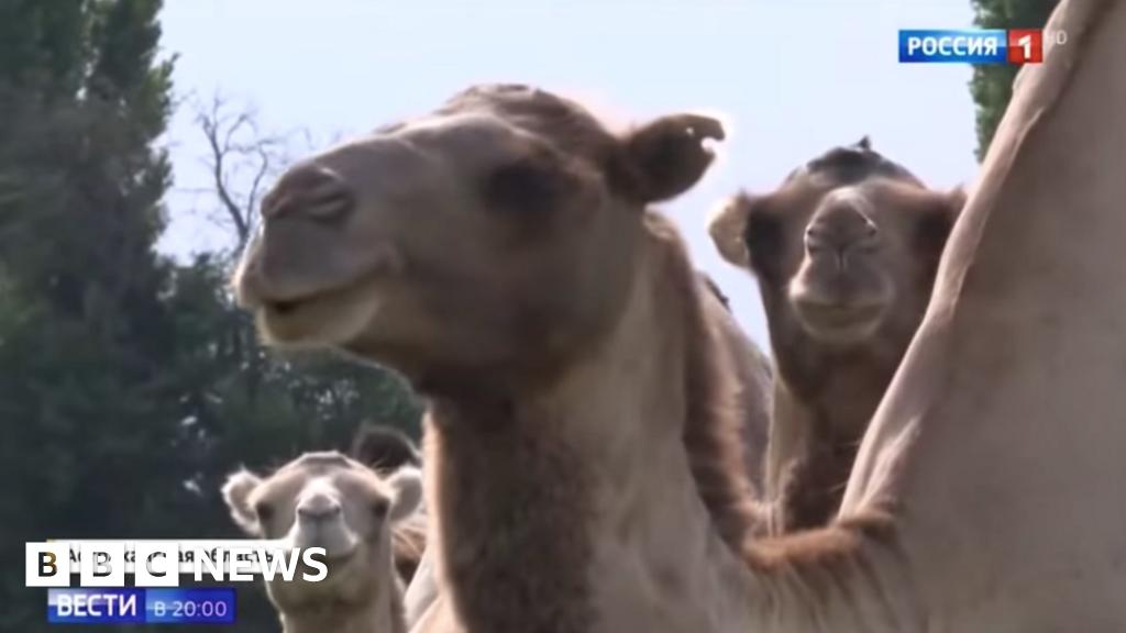 Camel Camel Milk