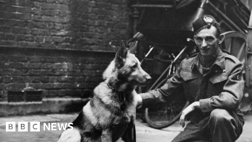 Purple wreath launched to remember animals in war