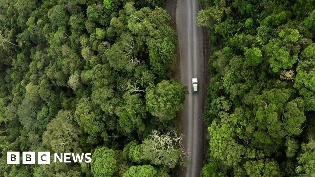 Colombia: Saving rare species in jungles once protected by war
