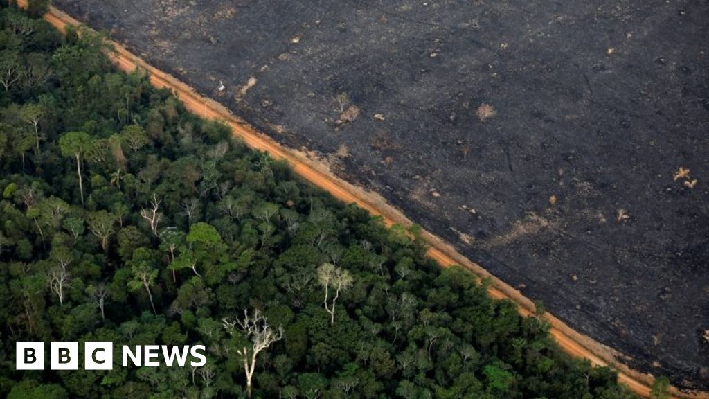 Brazil S Amazon Deforestation High In January Despite Rainy