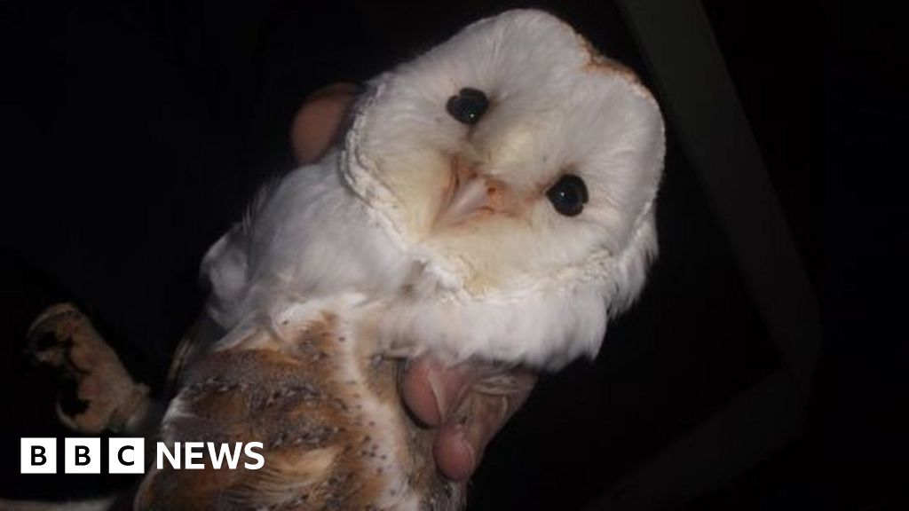 Barn owls rescued from illegal Walsall dealer