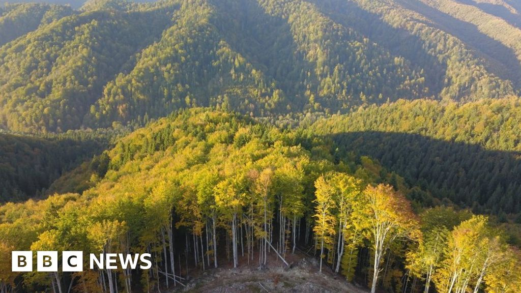 Romania forest murder as battle over logging turns violent