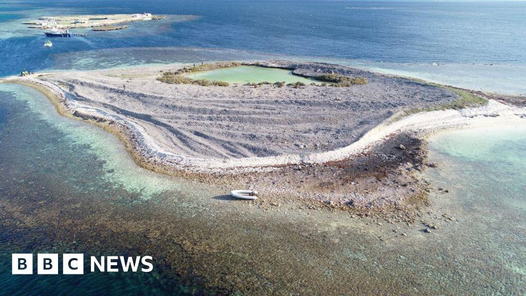 Seal 'helps' bust alleged international drug ring in Australia