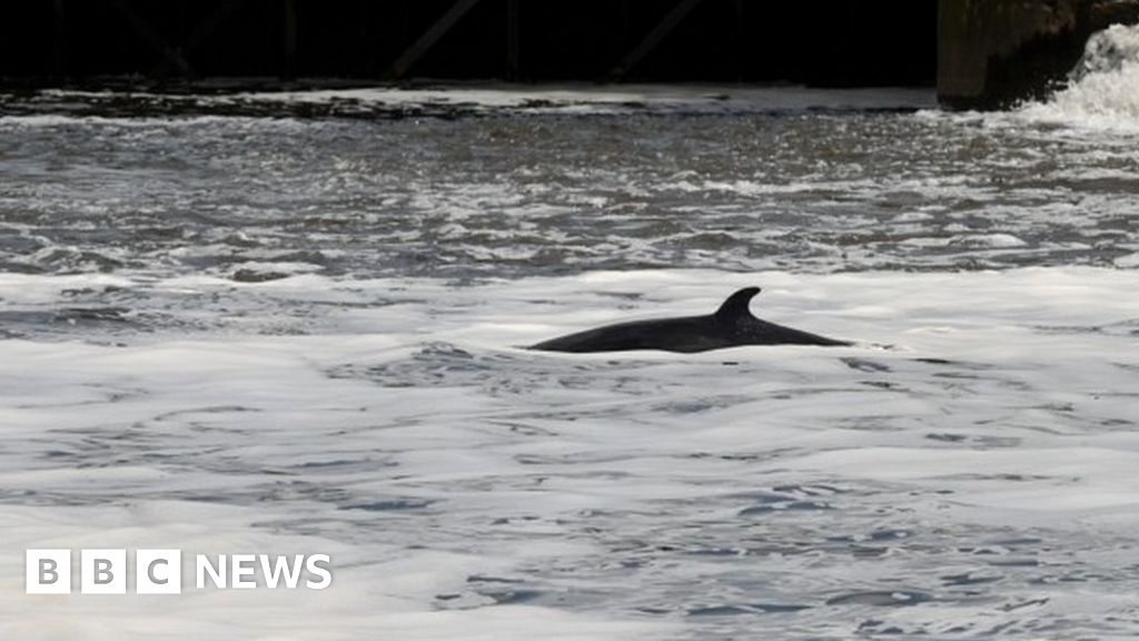 River Thames: Rescuers try to save stranded whale for second time