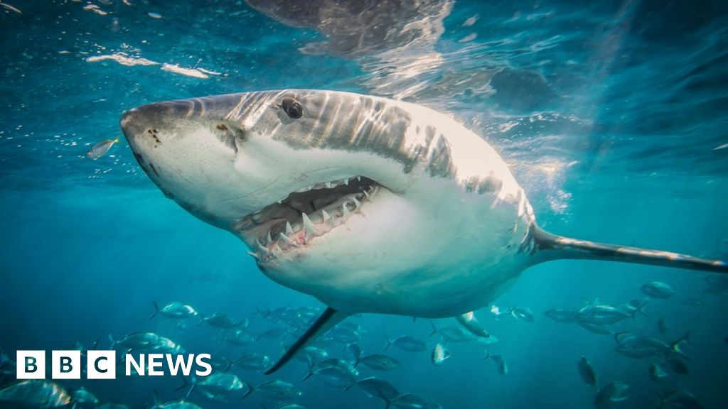 Is Australia really seeing more shark attacks?