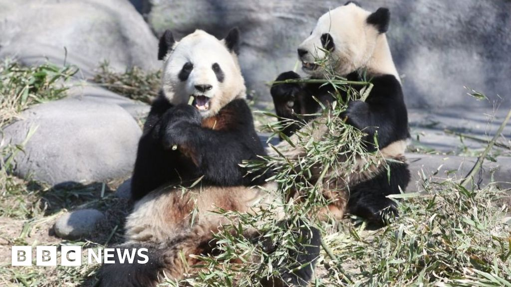 Coronavirus: Pandas leave Canada for China's bamboo
