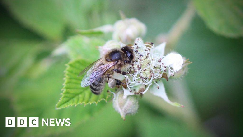Honey detective work raises fears for bees