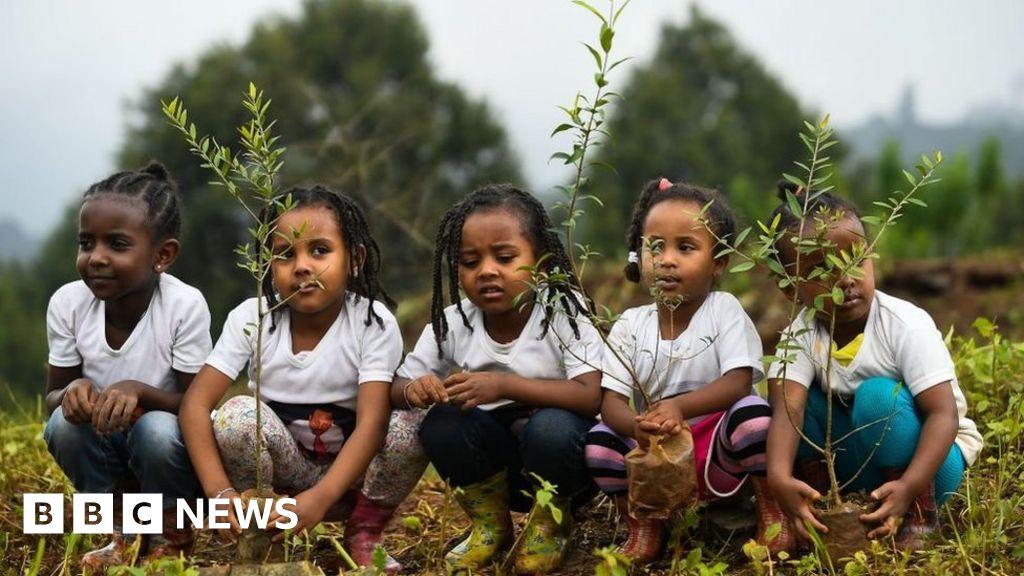 Did Ethiopia plant four billion trees this year?