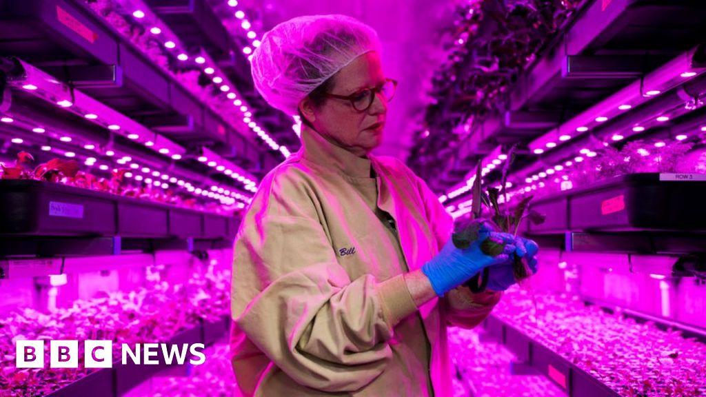 Ocado invests £17m in 'vertical' farms