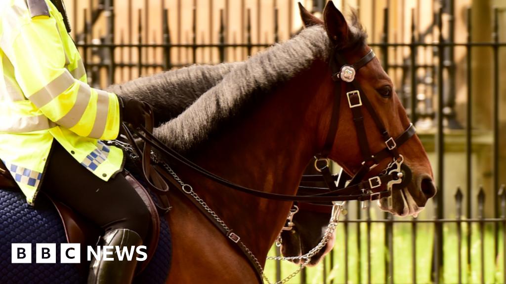 ex mounted police officer sues for 1m over hampden horse. Black Bedroom Furniture Sets. Home Design Ideas