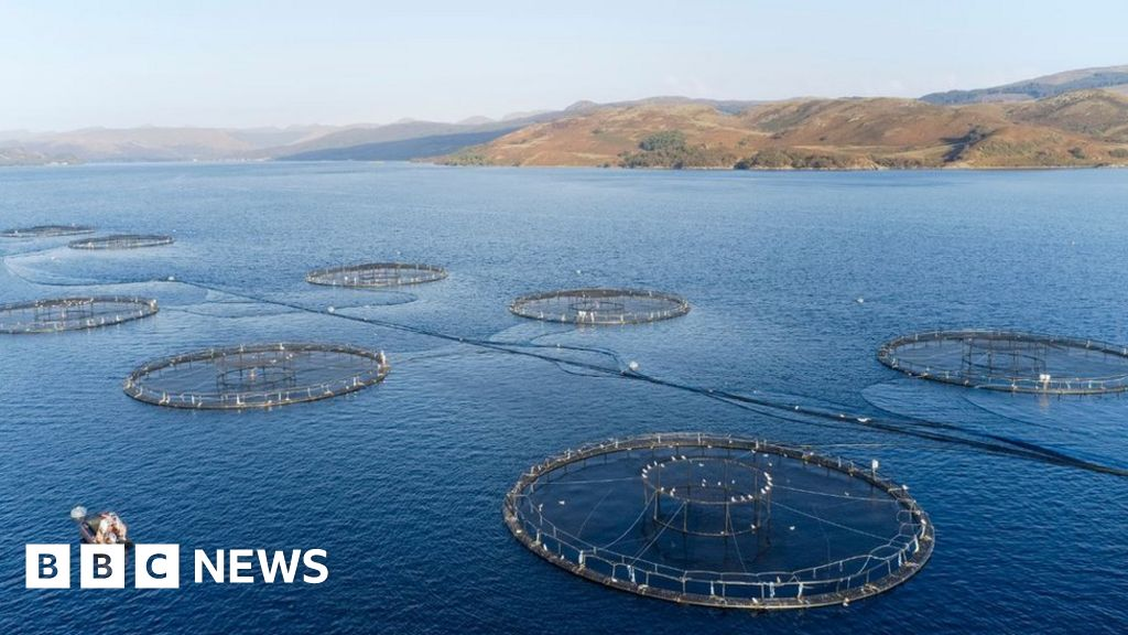 Salmon producers warn of 'huge' Brexit burden