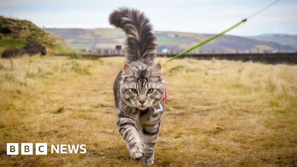'He gets to experience more than most cats'