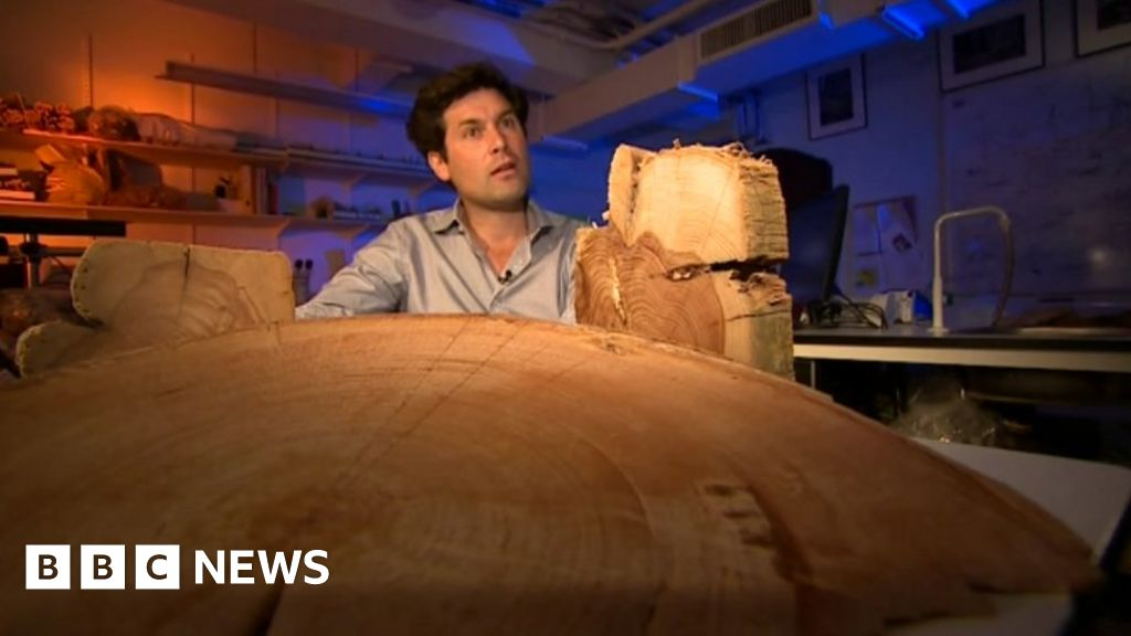 Ancient tree rings create 'climate diary'