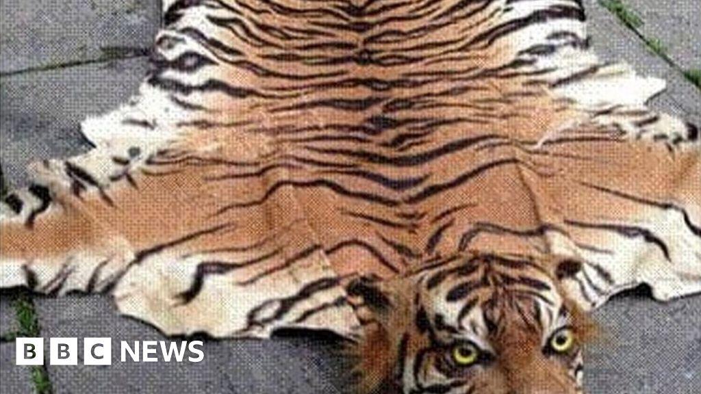 Trader sold 'extinct' tiger skin rugs on eBay - BBC News