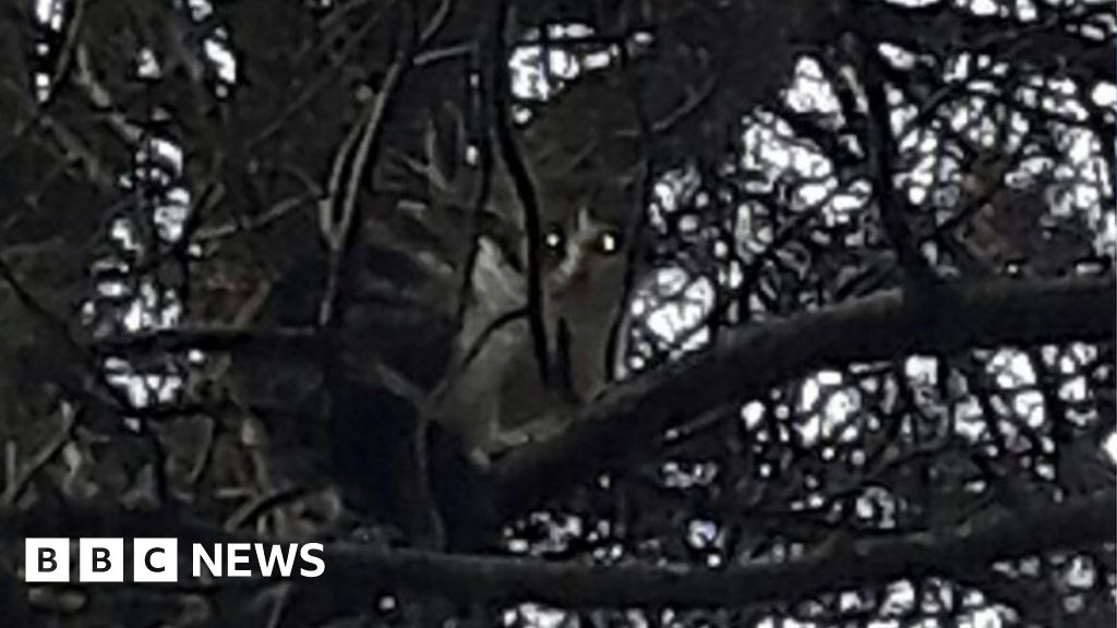 Cat rescued after four nights in Fife tree in freezing temperatures
