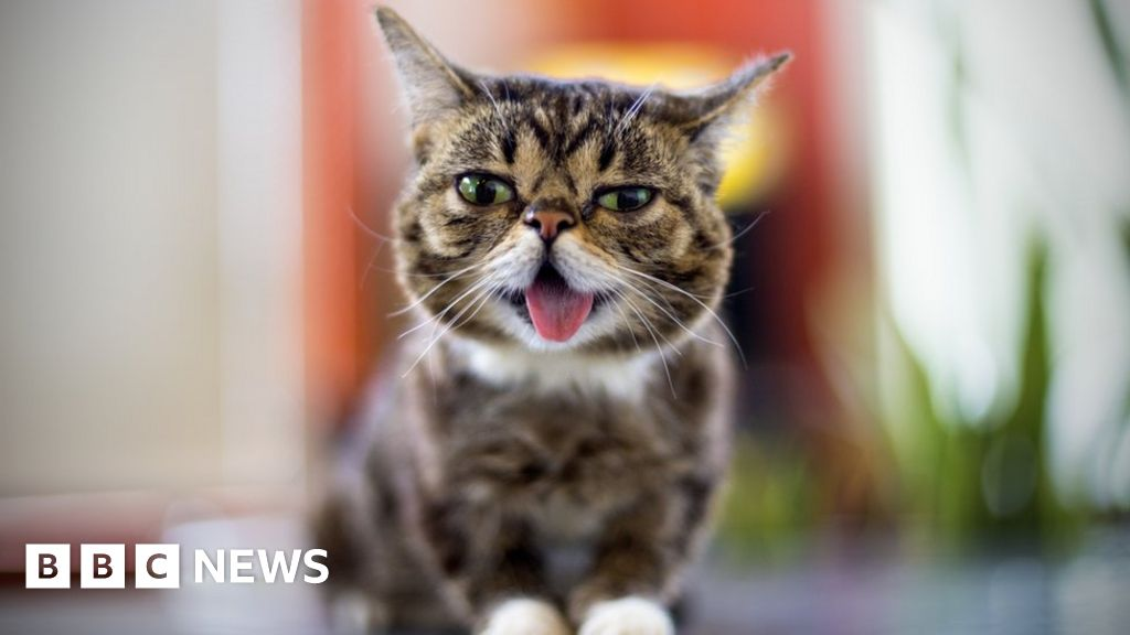 Lil Bub: Cat with millions of online fans dies