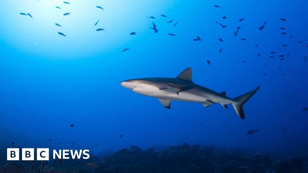 Oceans running out of oxygen say scientists