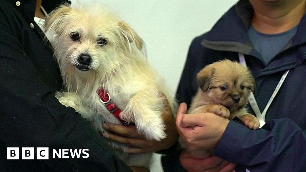 Chinese Company Clones Celebrity Dog and Other Tech News