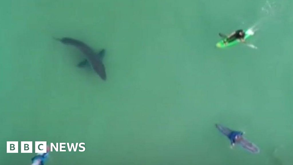 Curious shark sends surfers fleeing