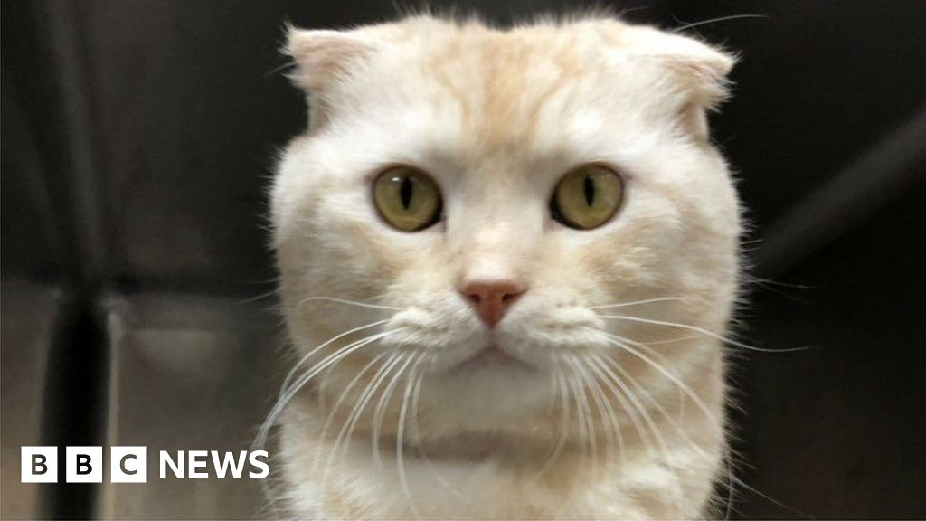 Pet owner fined for posting cat