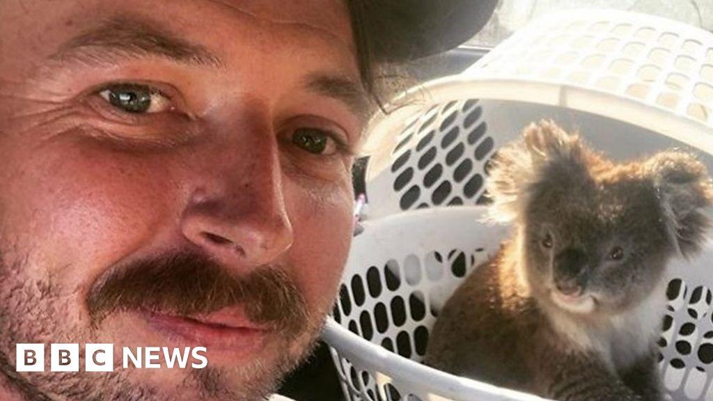 Climbing trees to save koalas on Kangaroo Island