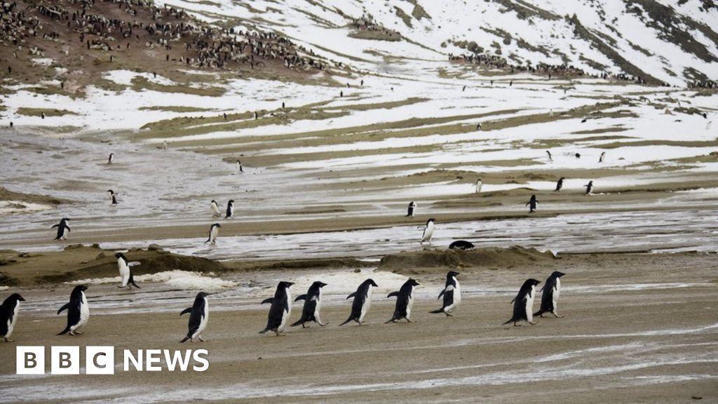 Antarctic island hits record temperature of 20.75C thumbnail