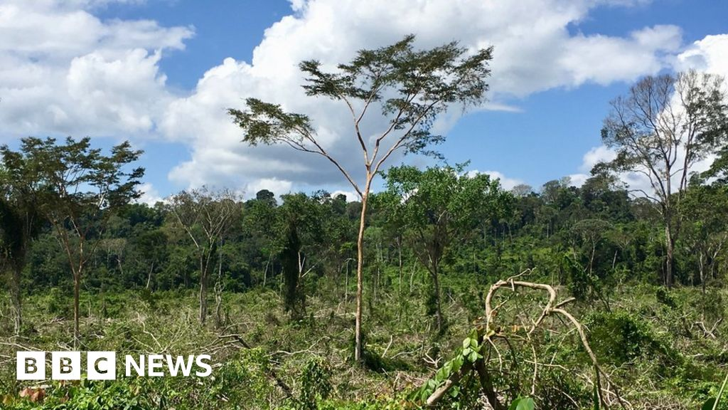 QnA VBage 'Football pitch' of Amazon forest lost every minute