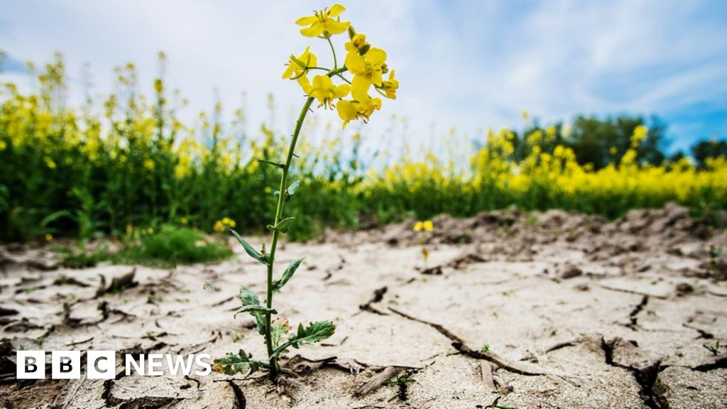 Climate change: 'Clear and unequivocal  emergency, say scientists