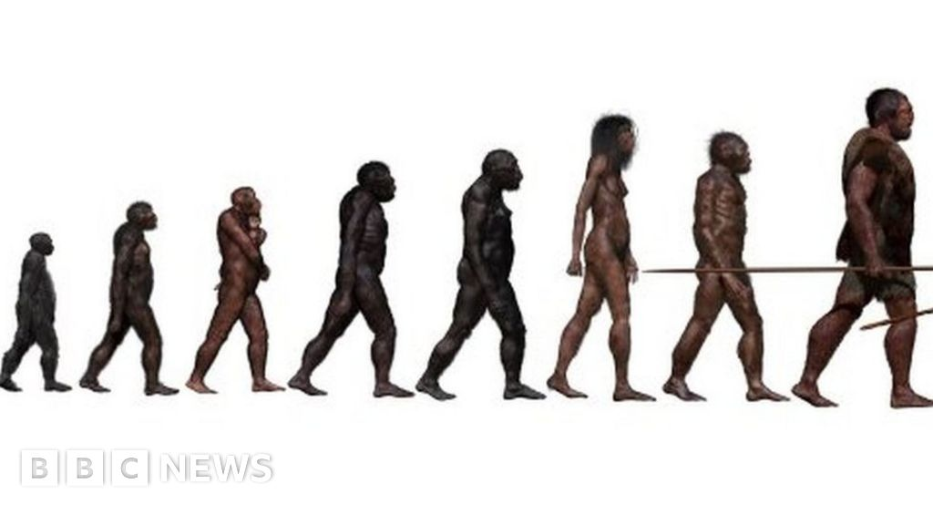 'Ghost' human ancestor discovered in West Africa - The Union Journal