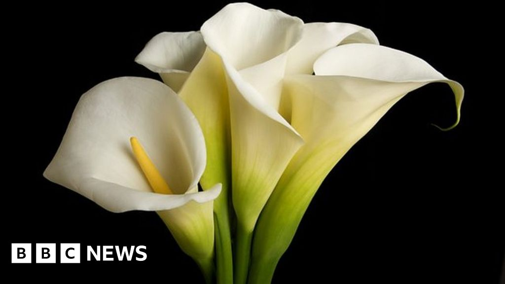 Council staff could be allowed to wear Easter lilies - BBC News