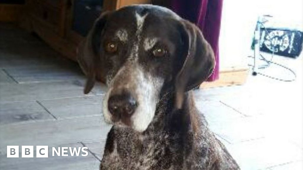Alabama Rot: Six Welsh cases of deadly dog disease in two months