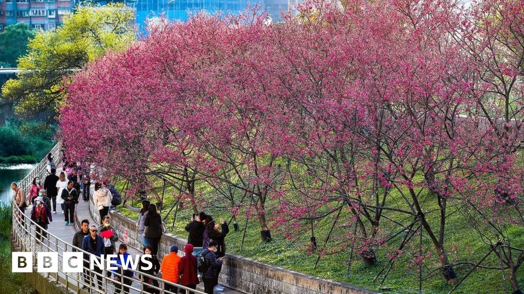 National Trust to plant blossom trees in cities