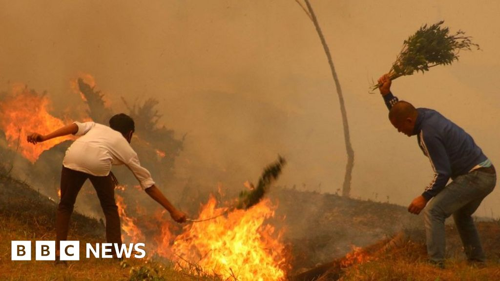 Why are Indian forest fires worrying scientists?