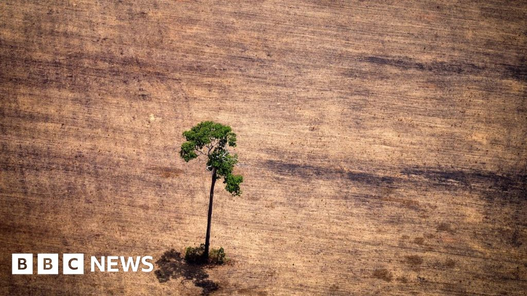 QnA VBage Deforestation: Tropical tree losses persist at high levels