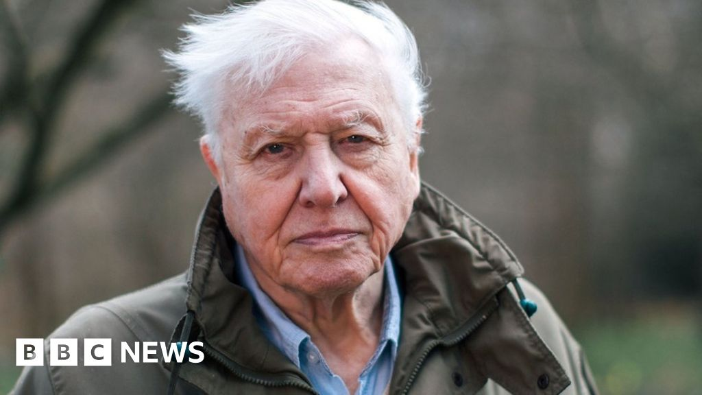 News Daily: Attenborough climate warning and Bowie footage showed