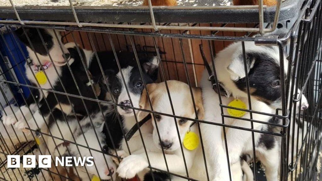 Coronavirus: Lockdown year 'worst ever' for dog thefts