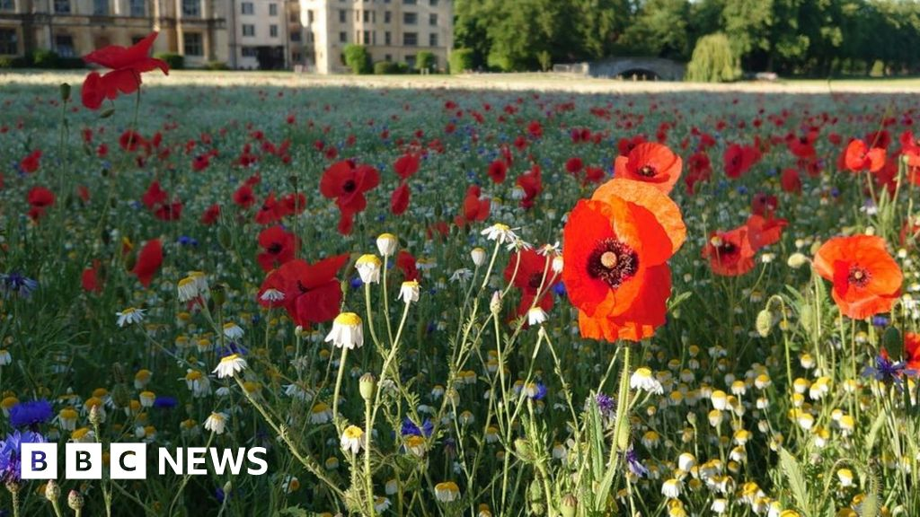 Wildflowers bloom on pristine university lawn