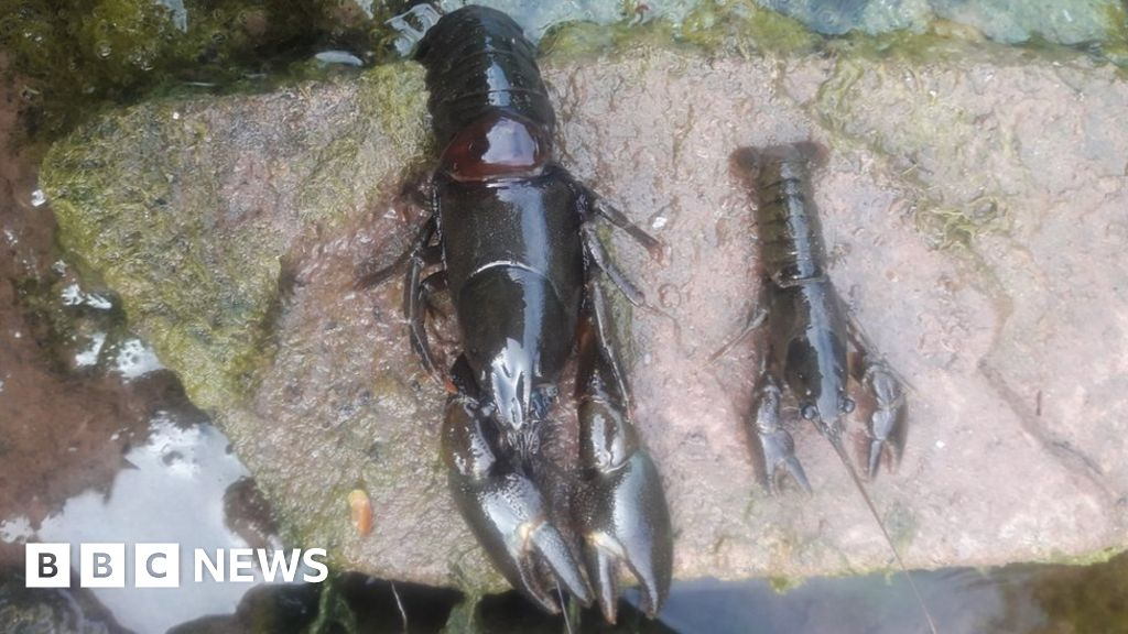 River water tested after pollution kills fish