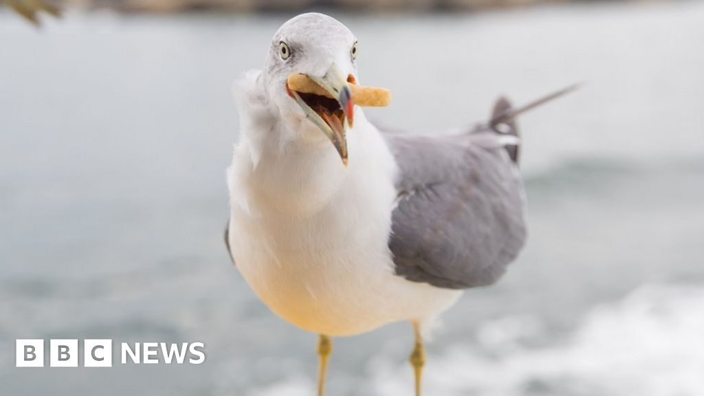 Seagull Tonypandy man imprisoned for killing: according to the RSPCA appeal