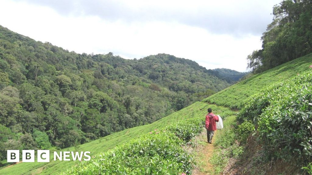 A third of tropical African plants face extinction