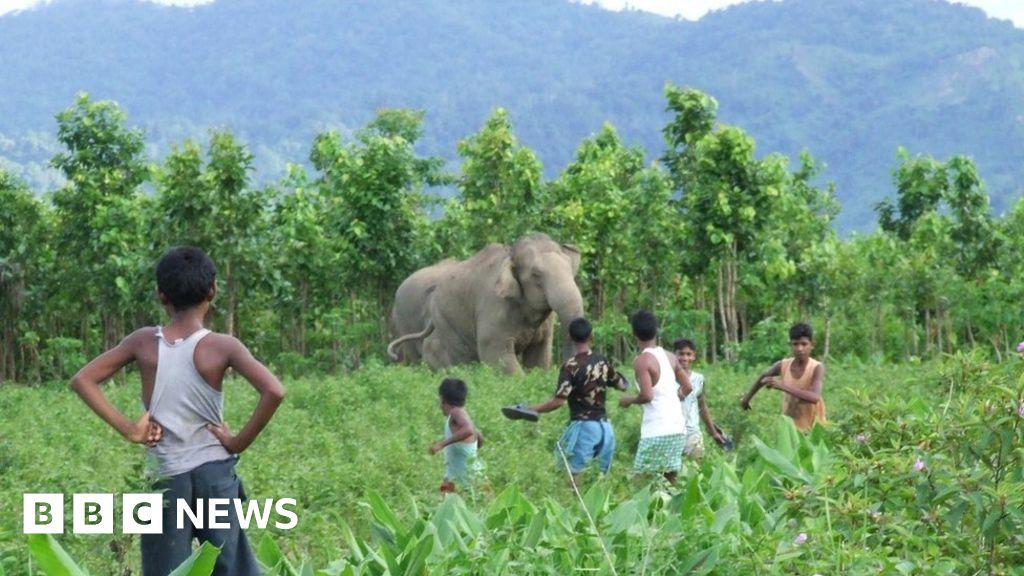 Elephant and tiger attacks highlight India's wildlife