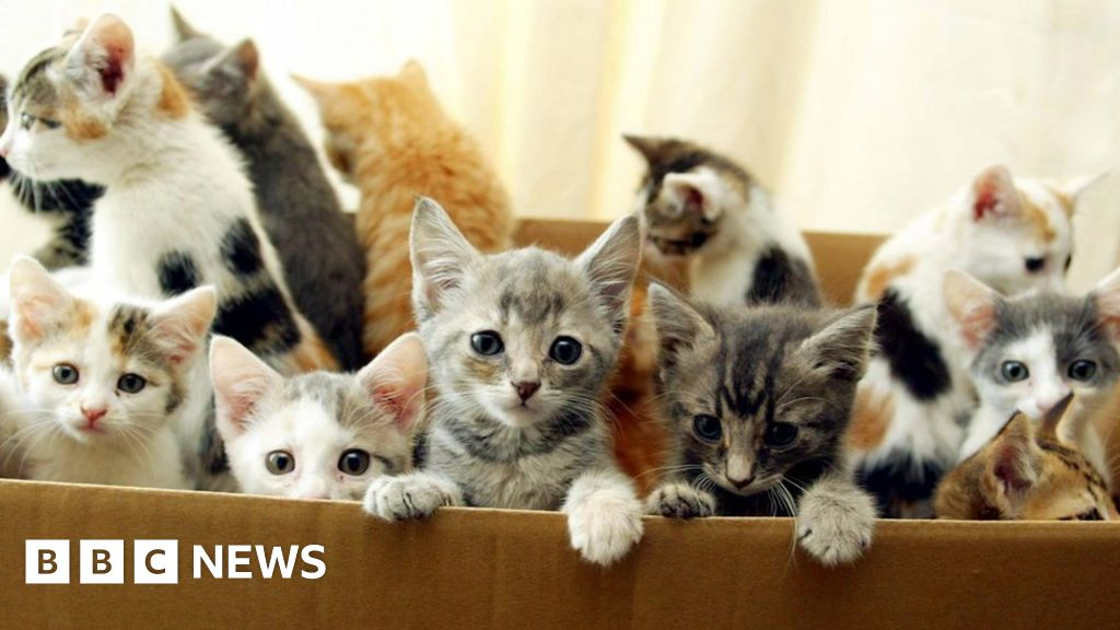 Facebook Pet Sales Warning Over Kittens And Puppies Bbc News