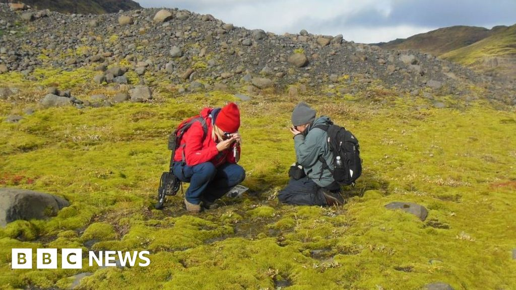 Origins of land plants pushed back in time
