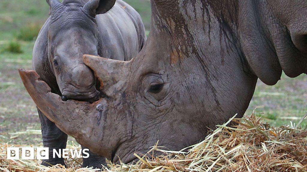 Fake rhino horn invented to ruin poachers' market