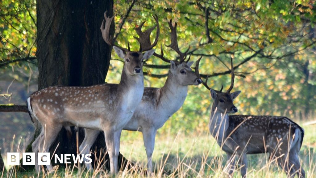 Bovine TB leads to Dyrham Park deer herd being culled thumbnail
