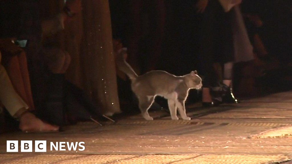 Image result for CAT ON CATWALK SHOW BBC