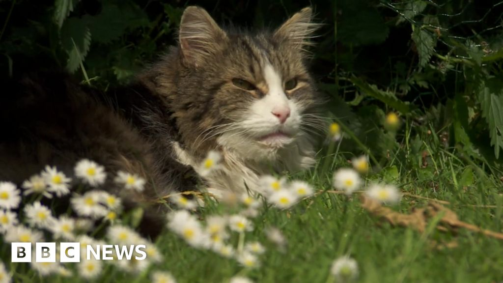 Family's shock as cat they thought they had cremated comes home