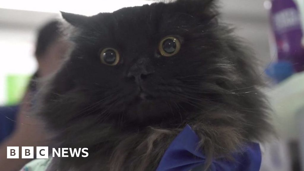 Mr London Meow: The therapy cat visiting hospitals thumbnail